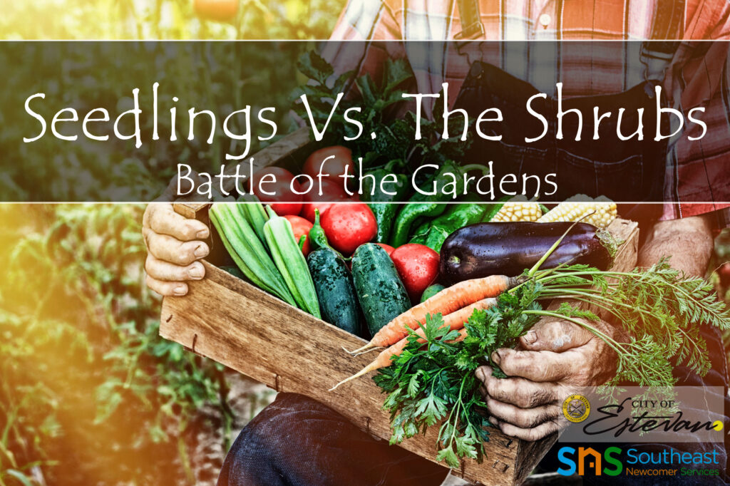 Seedlings vs. The Shrubs